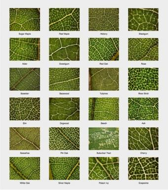 different patterns in leaves