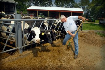 Dairy farmer with his cows