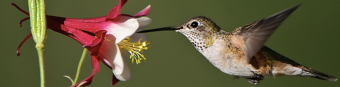 humming bird on a flower