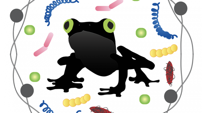 Frog for Alexandra DeCandia's paper