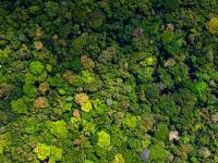 a view from above of thousands of green trees